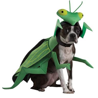 praying mantis animal planet pet halloween costume